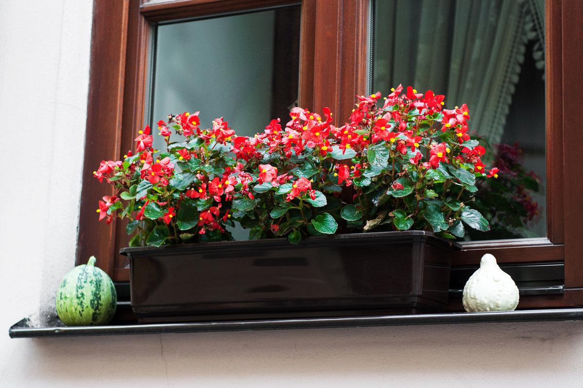 Jakie Kwiaty Wybrać Na Balkon Domidpl